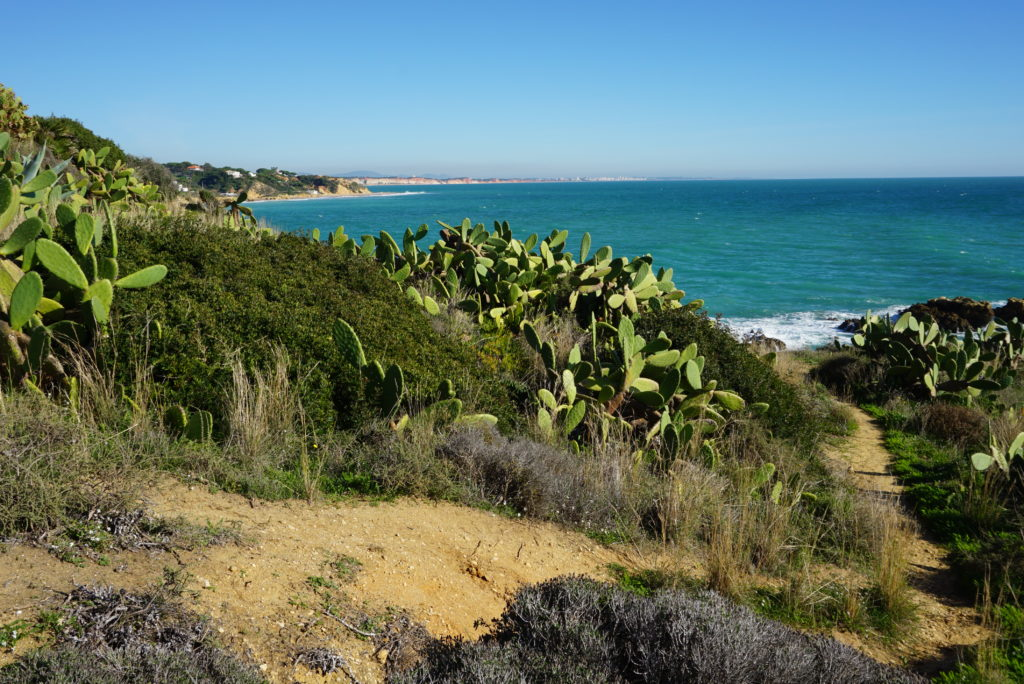 East of Albufeira Old town. There are also many beautiful seafront oak ways for you to enjoy.